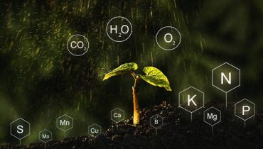 Organic Products Certification in Sri Lanka